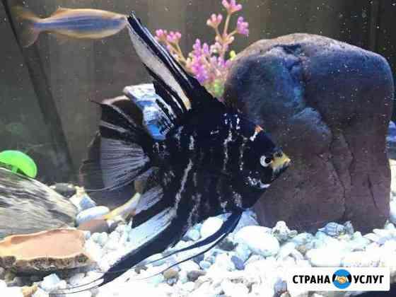 Обслуживание аквариумов в Туле, очистка аквариума Тула