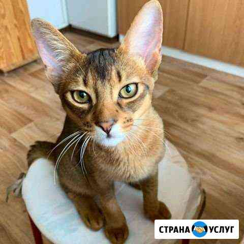 Передержка кошек в квартире (индивидуальная) Москва