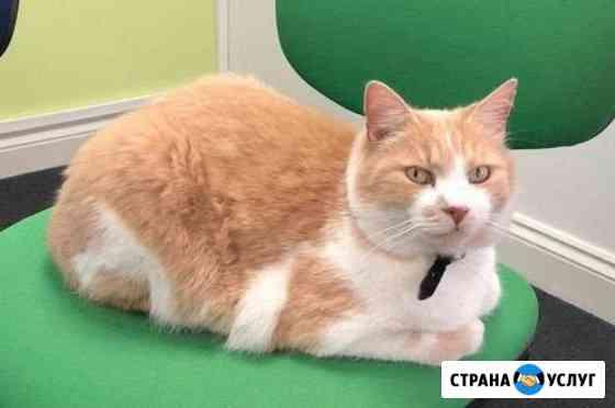 Няня для кота Москва