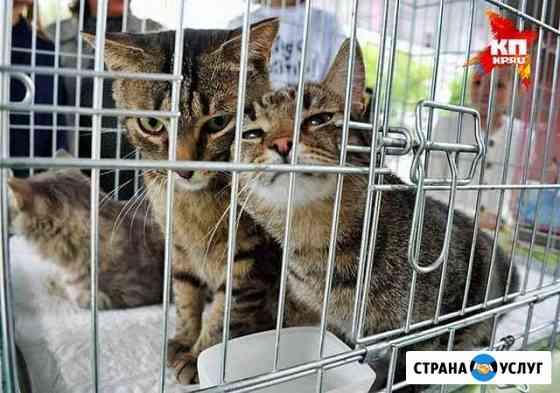 Ловля кошек Нижний Новгород