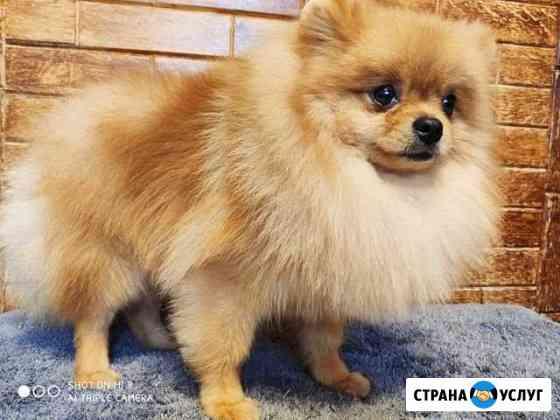 Стрижка собак и кошек, груминг Москва