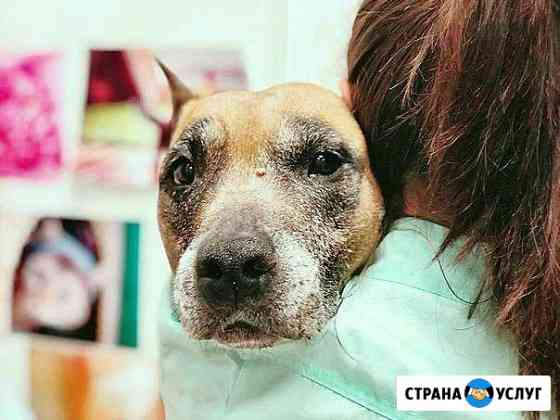 Ветеринарный врач на дом, вызов ветеринара Омск