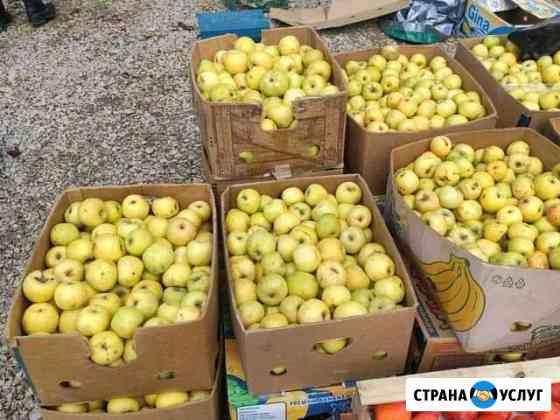Яблоки Махачкала