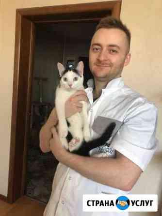 Ветеринарный врач. Стерилизация кошки на дому Санкт-Петербург