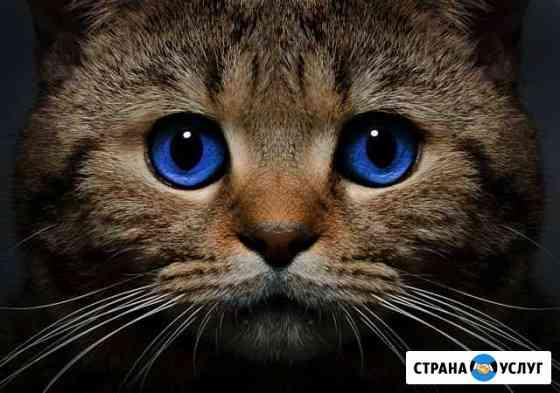 Передержка кошек Санкт-Петербург