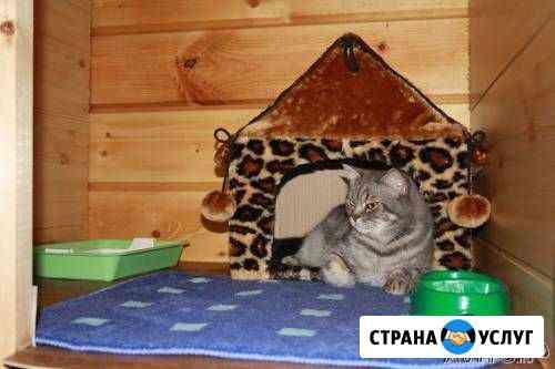 Гостиница для животных «Фауна» Нижний Тагил