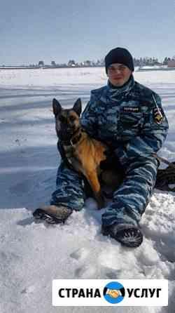 Дрессировка собак Ставрополь Ставрополь