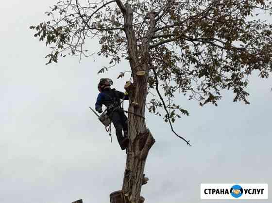 Спил деревьев №1 на Кубани Краснодар