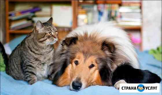 Передержка животных, зоогостиница Брянск