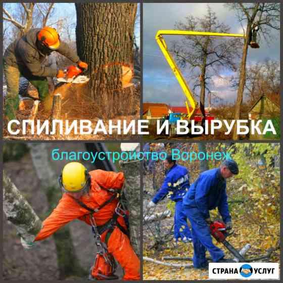 Спиливание Воронеж, спиливание деревьев в Воронеже Воронеж