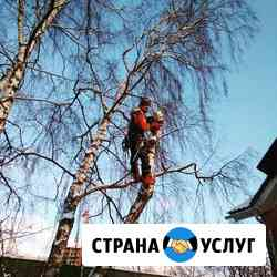 Спил, удаление деревьев, корчевание пней, удаление веток Егорьевск