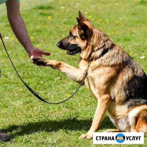 Дрессировка собак и воспитание щенков Североморск