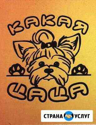 Профессиональная стрижка собак и кошек Рязань