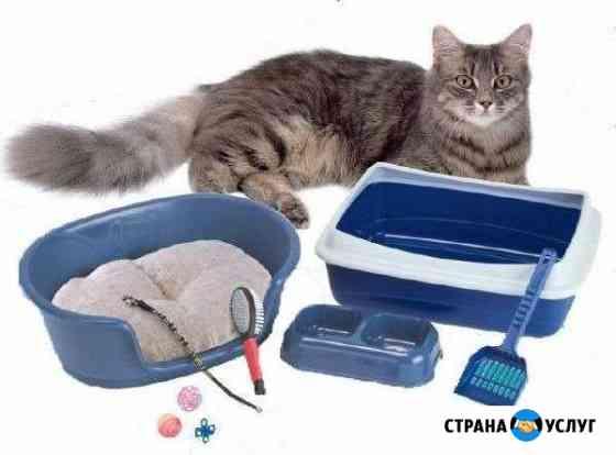 Присмотр за животными Великий Новгород