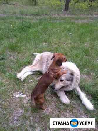 Выгул собак Климово