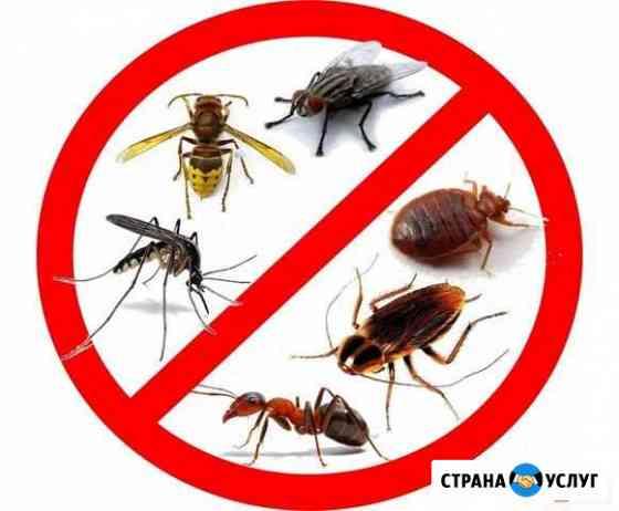 Бюро Санитарных Услуг. Уничтожение насекомых Великий Новгород