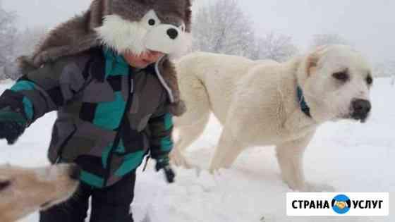 Фото с животными (собаки, лошади, жители фермы) Питкяранта