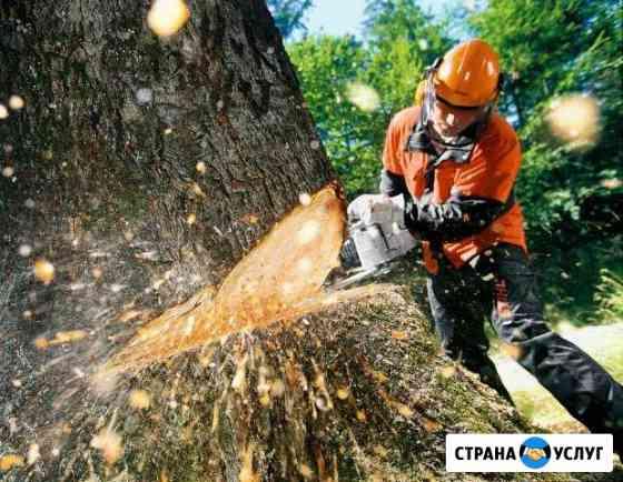 Спил, обрезка, вырубка деревьев. Пильщик, лесоруб Владикавказ