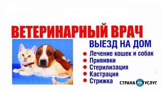Ветеринарные услуги, кастрация,стерилизация кошек Чебоксары