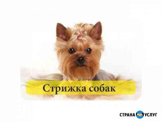 Груминг (стрижка ) собак разных пород Шуя