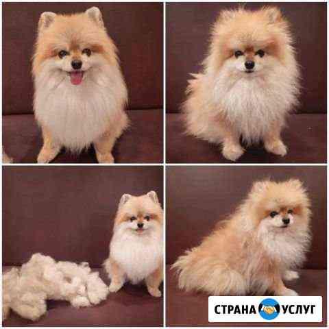 Стрижка собак на дому Липецк