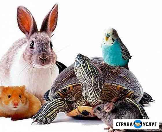 Передержка мелких животных Конаково