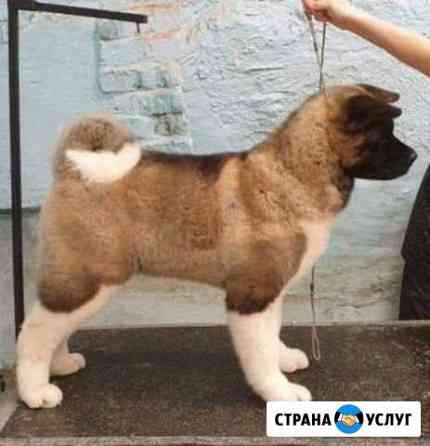 Стрижка собак Абакан