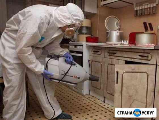 Уничтожение клопов,тараканов Архангельск