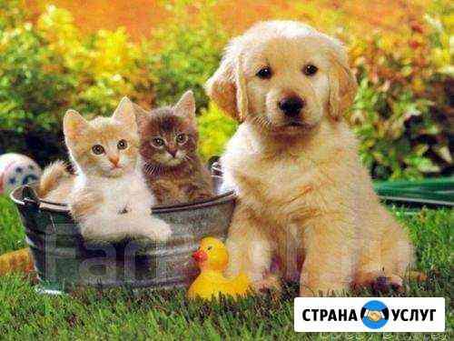 Передержка животных Хабаровск