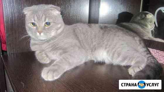 Вязка Мичуринск