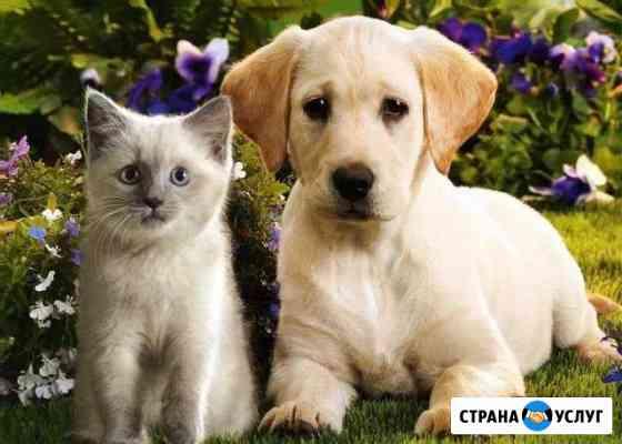 Гостиница,передержка животных Брянск