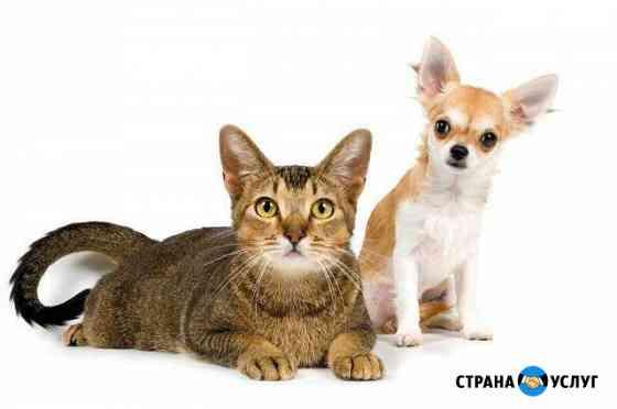 Передержка животных Вологда