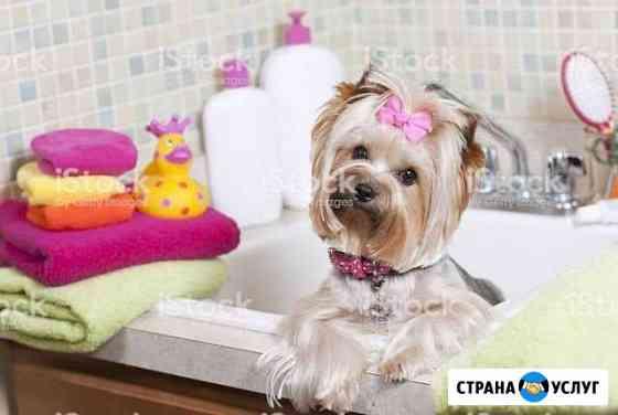 Стрижка собак в Петрозаводске Петрозаводск