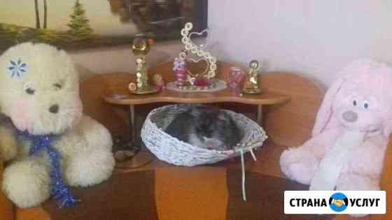Кошачья передержка Нерюнгри