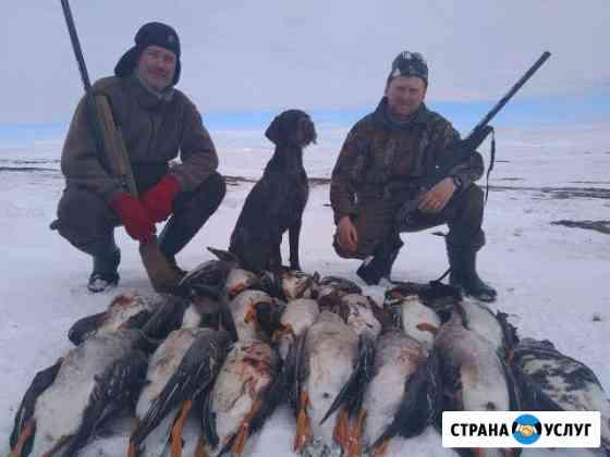 Охота на гуся весной.Рыбалка круглый год.Заполярье Воркута