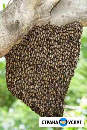 Сниму рой пчёл Орёл