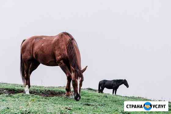 Лошади Карачаевск