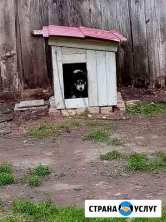 Изготовлю будку для небольшой собаки Бессоновка