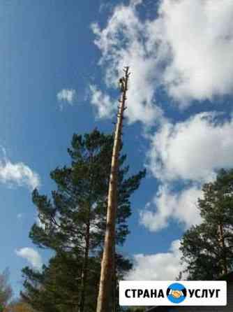 Профессиональный спил деревьев, обрезка деревьев Томск