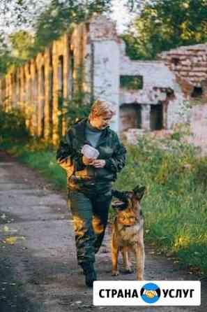 Дрессировка собак Иваново