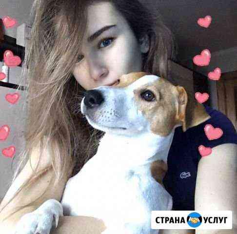 Передержка собак Брянск