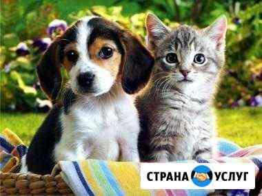 Передержка животных Курск