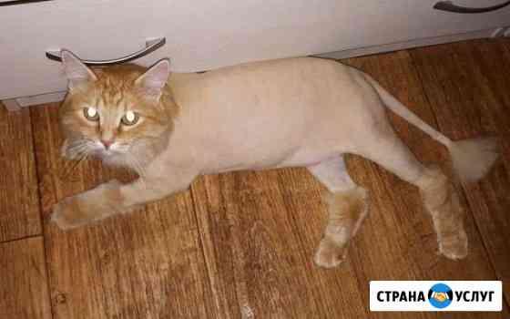 Стрижка кошек и собак Омск