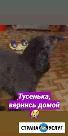 Пропала собака Белогорск