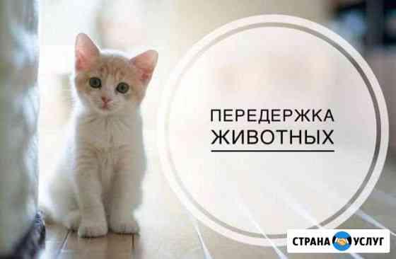 Передержка кошек Воркута