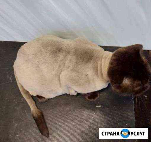 Стрижка котов и кошек Брянск