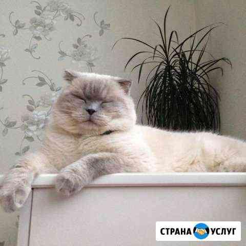 Вязка с прямоухой кошкой белых цветов бесплатно Чебоксары