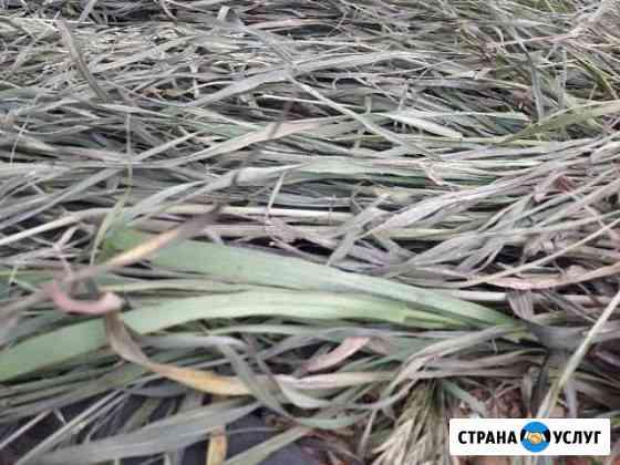 Вывезу траву бесплатно Черногорск