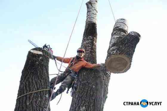 Удаление деревьев на кладбищах Смоленск