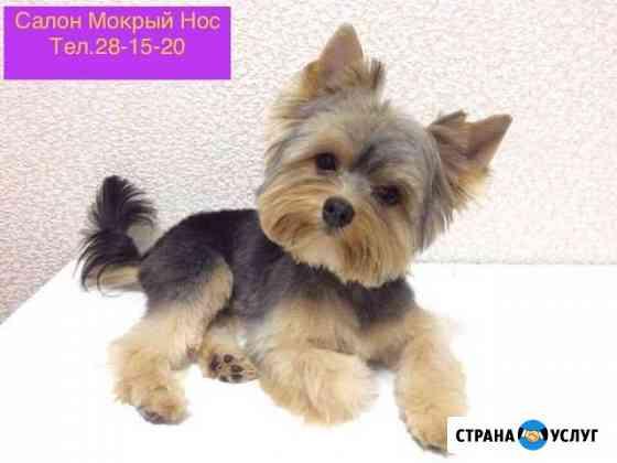 Стрижка собак и кошек Петрозаводск